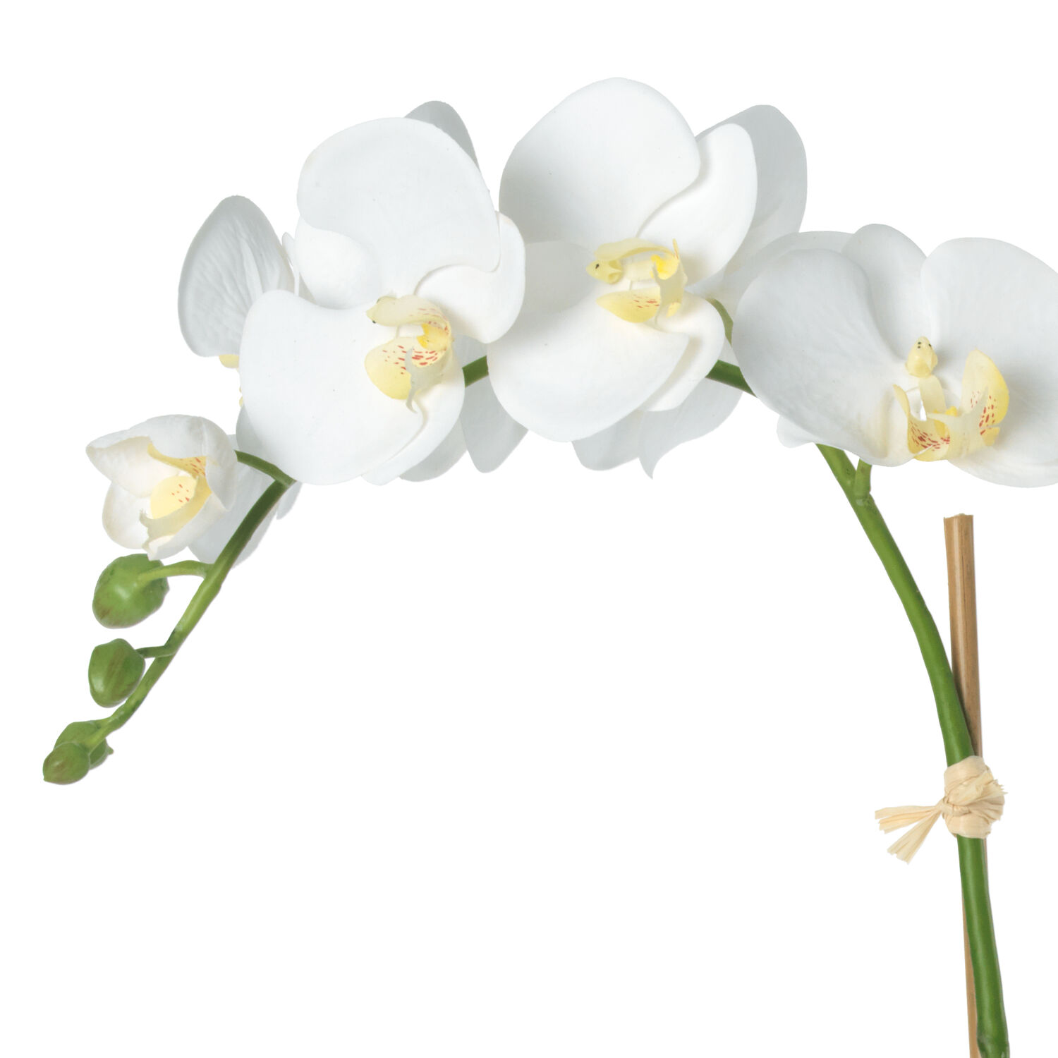 White Orchid in Wicker Cachepot