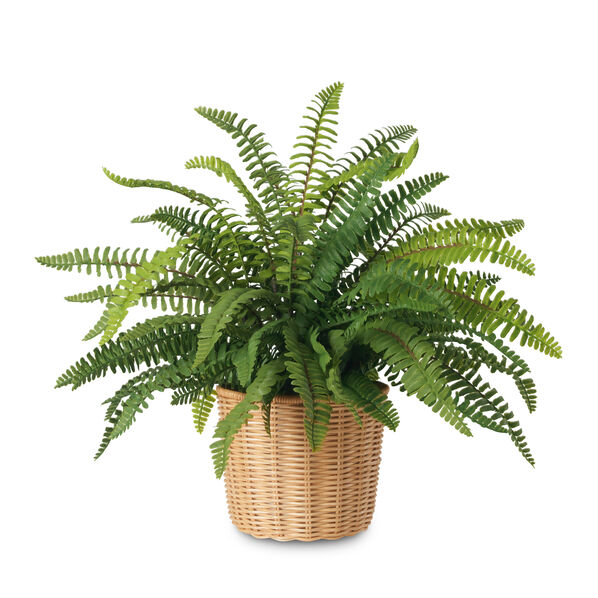 Boston Fern and Wicker Cachepot